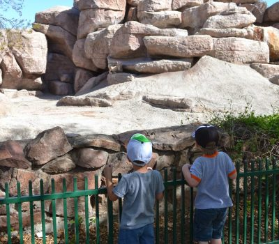 Zoo Day at the Denver Zoo!