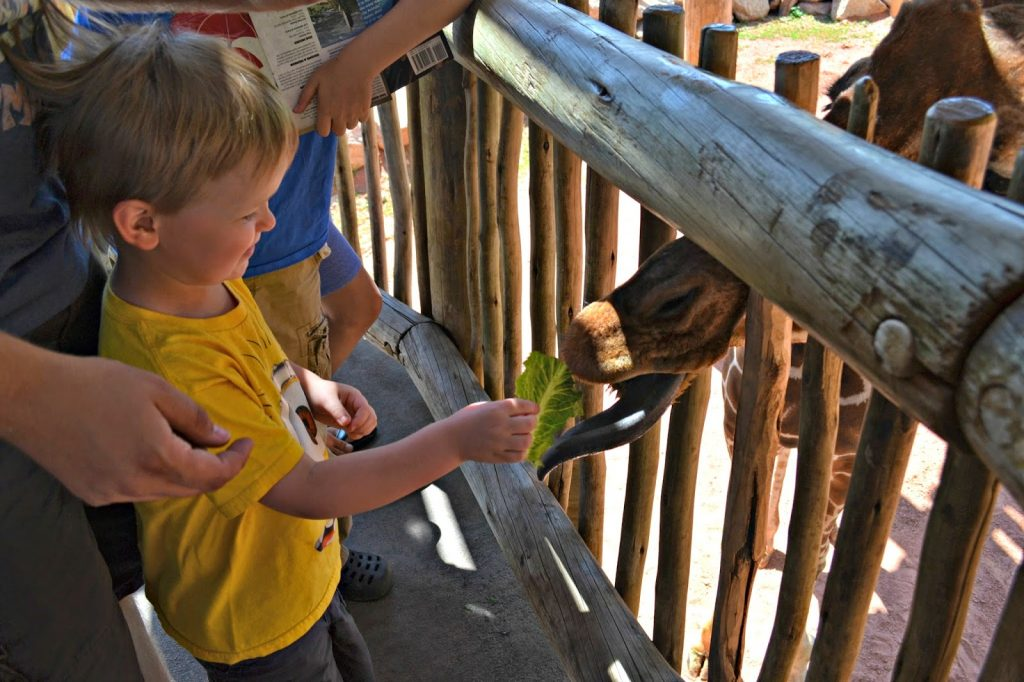 Cheyenne Mountain Zoo - Colorado Springs #Colorado.  Zoo in Colorado.  Cheyenne Mountain Zoo.  Things to do in Colorado