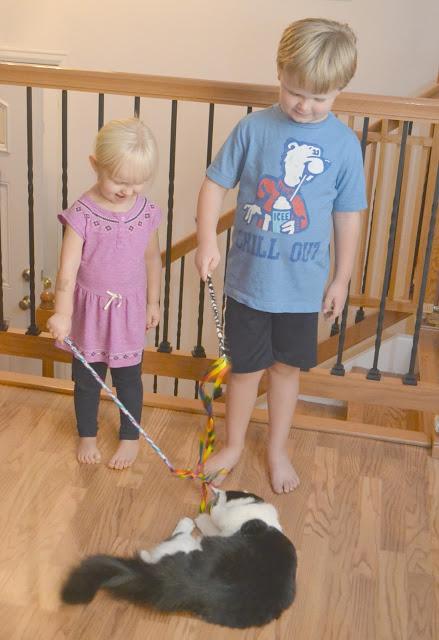 PetSmart Charities, PetSmart Charities National Adoption Weekend, Tips For Bringing A New Cat Into Your Home , adopting a new animal, adopting with Petsmart, petsmart adoptions