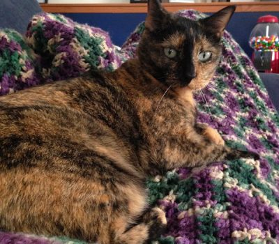 Homemade Tuna and Cheddar Cat Treats
