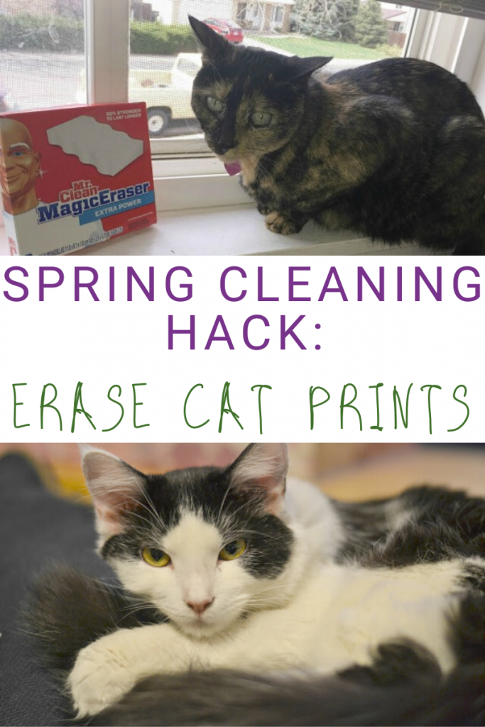 Spring Cleaning Hacks to Erase Those Cat Prints, spring cleaning tips, spring cleaning hacks, spring cleaning, erase cat prints, spring cleaning tips