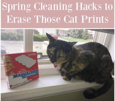 Spring Cleaning Hacks to Erase Those Cat Prints