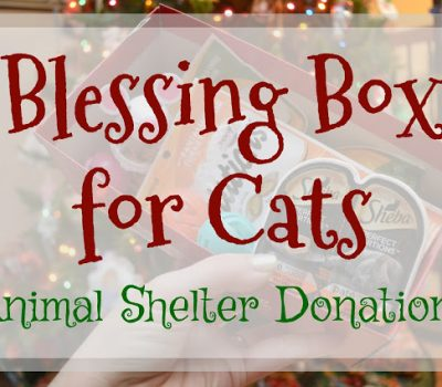 Blessing Box for Cats – Animal Shelter Donations
