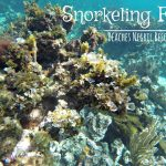 Snorkeling Fun - Beaches Negril Resort & Spa