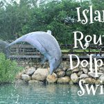 Island Routes Dolphin Swim at Dolphin Cove