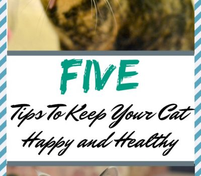 Five Tips To Keep Your Cat Happy and Healthy