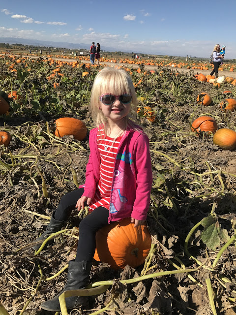 Anderson Farms Colorado, Visiting Anderson Farms in Colorado, Pumpkin Patches in Colorado