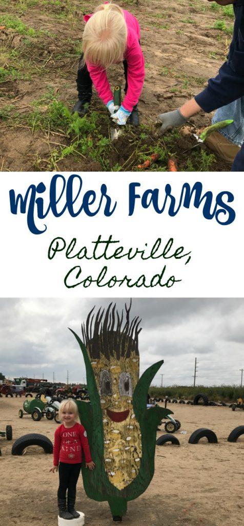 Miller Farms Field Trip, farms in colorado, Miller Farms Colorado, Miller Farms Platteville, visiting Miller Farms, Tips For Visiting Miller Farms in Platteville Colorado, Fall field trips in Colorado