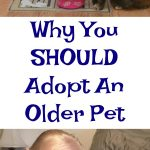 Adopting an Older Pet - #HillsTransformingLives