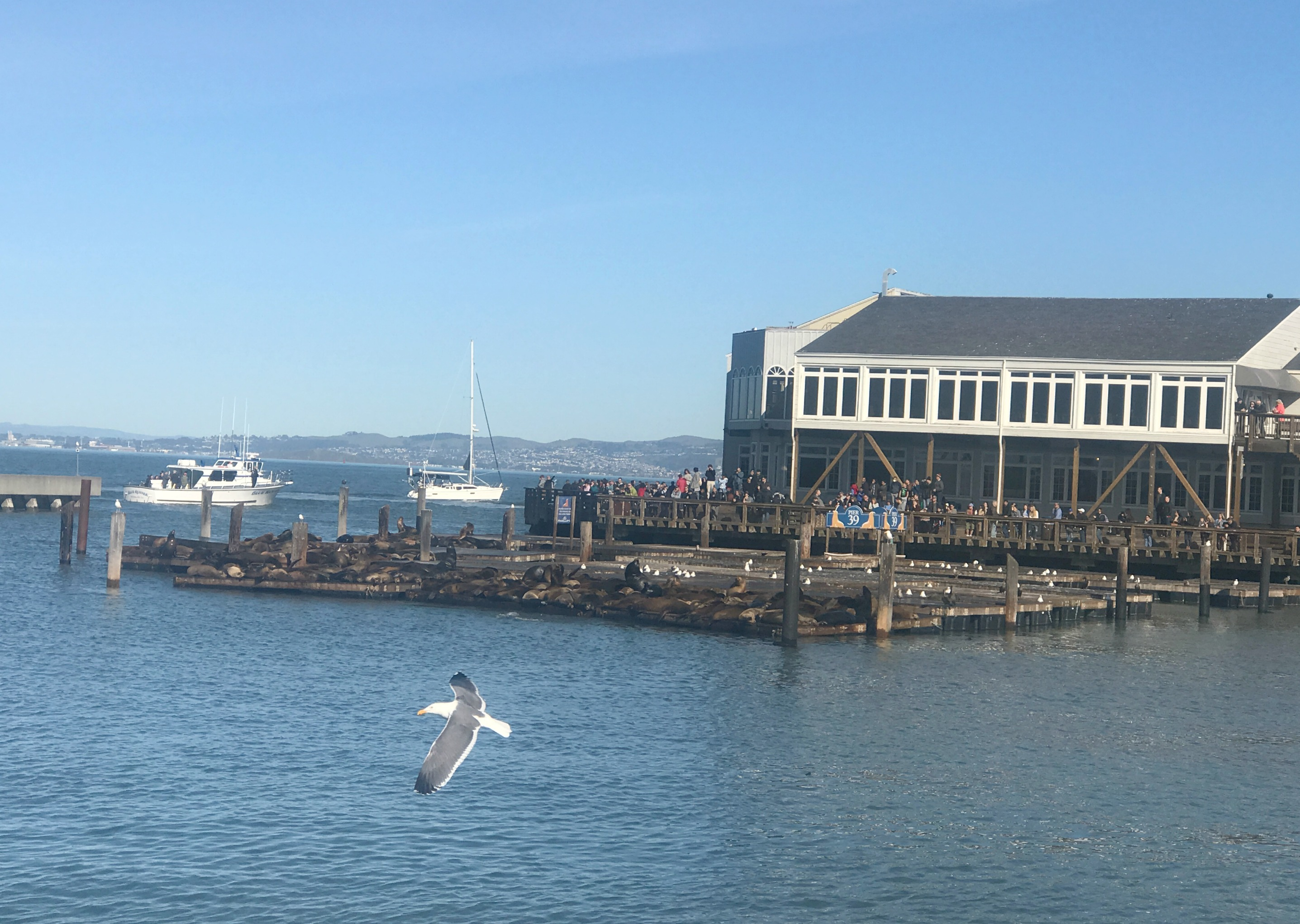 Pier 39 San Francisco, Fisherman's Wharf, Explore San Francisco in One Day