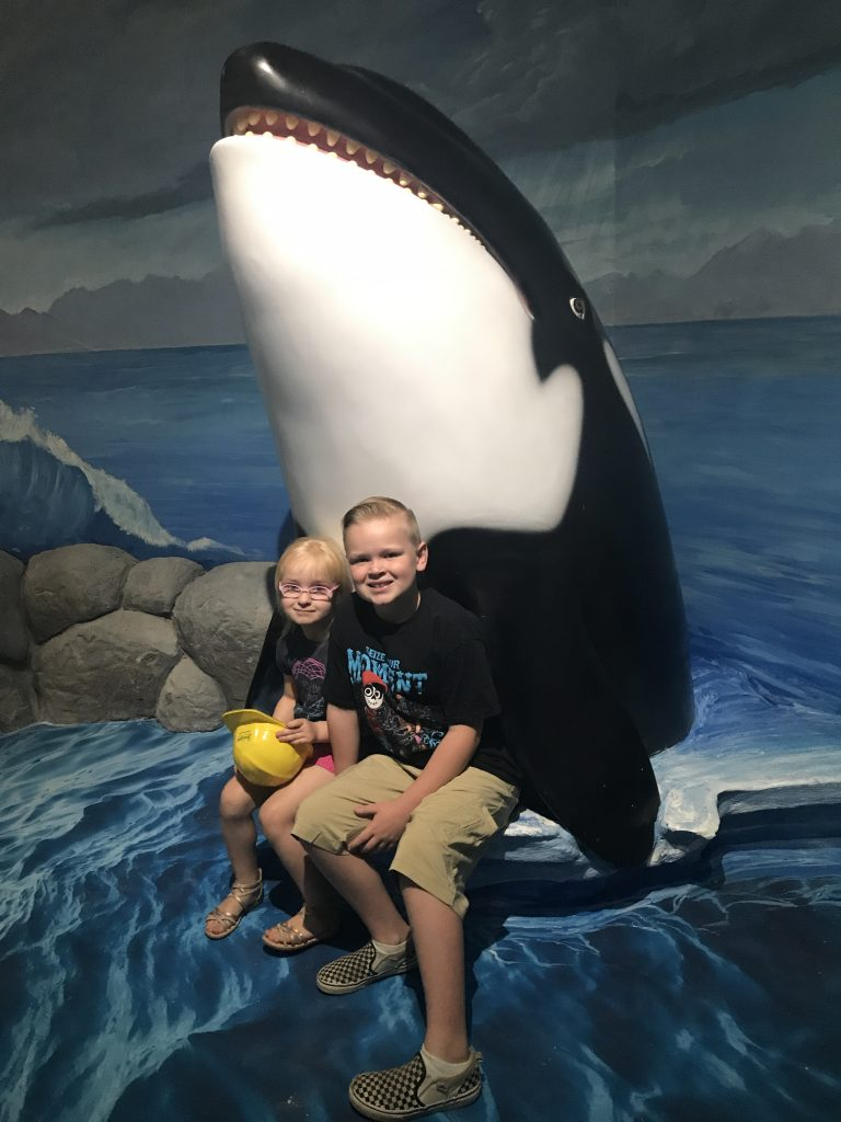 Why You Need To Visit seaquest, seaquest aquarium, seaquest, tips for visiting seaquest aquarium, seaquest in Colorado, SeaQuest Aquarium locations
