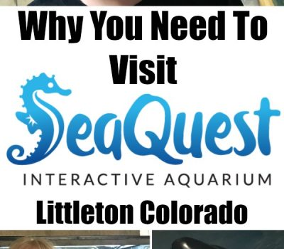 Why You Need To Visit SeaQuest Interactive Aquarium Littleton Colorado