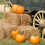 8 Must Visit Pumpkin Patches Around Colorado